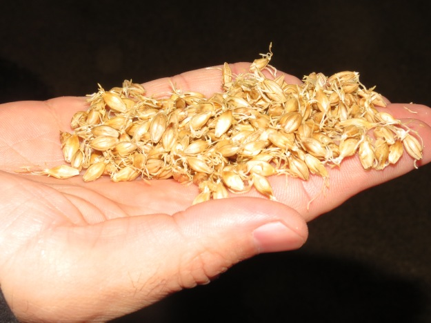 balvenie germinated malted barley