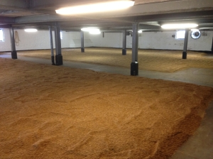bowmore_steeped_malt_germinating